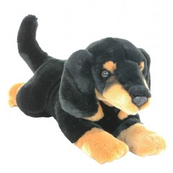 Dachshund Sausage Dog Puppy...