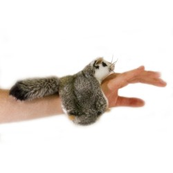Squirrel Glider Snapband...