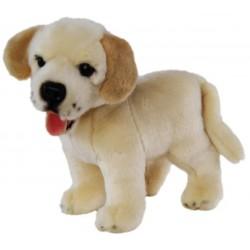 Yellow Cream Labrador...