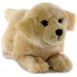 Golden Retriever Dog Maple...