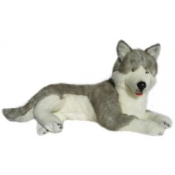 Siberian Husky Rocco...