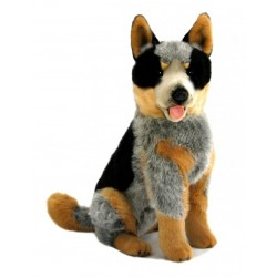 Australian Cattle Dog Rocky...