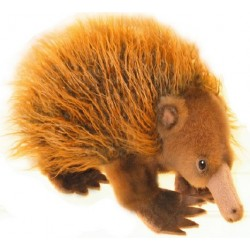 Echidna Harry Plush Toy by Boccetta Plush Toys