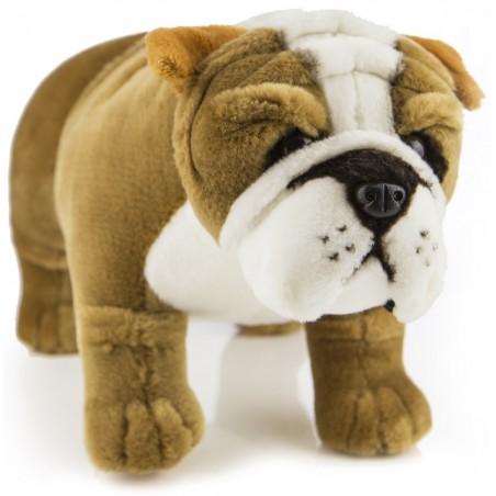 Bulldog Baxter by Bocchetta